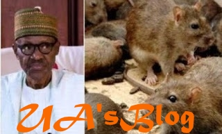 Why Rats Took Over Aso Rock, 'Chased' Buhari Away From Office - Presidency