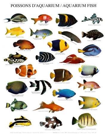 Nature Picture Selection Fish For Aquarium
