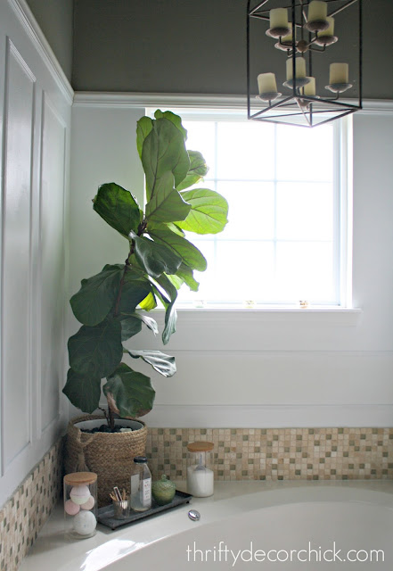 how to not kill the fiddle leaf plant