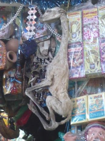 Mercato di Camilo