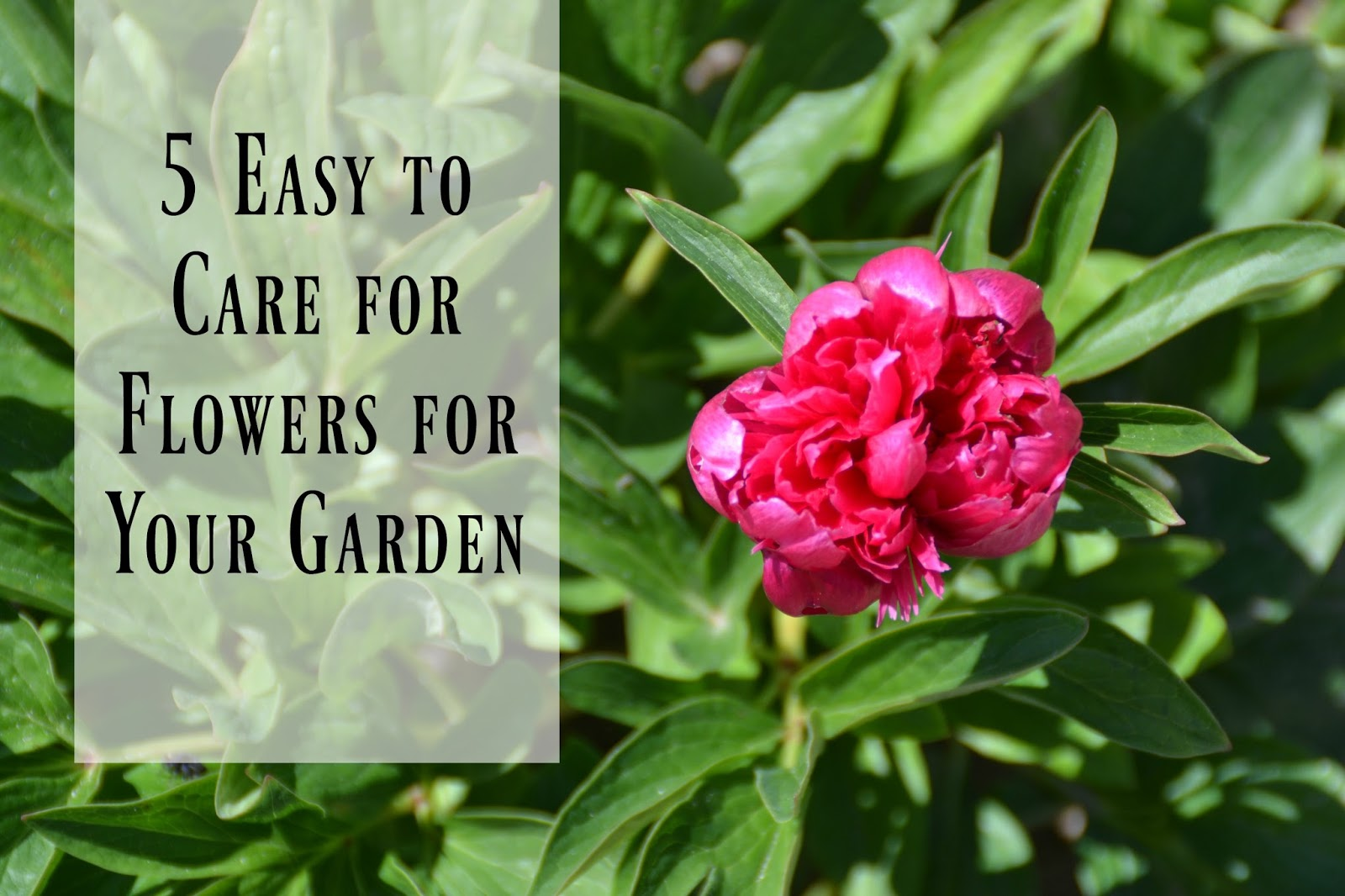Top 28 Easy Flowers To Take Care Of 4mykiddos 5 Easy