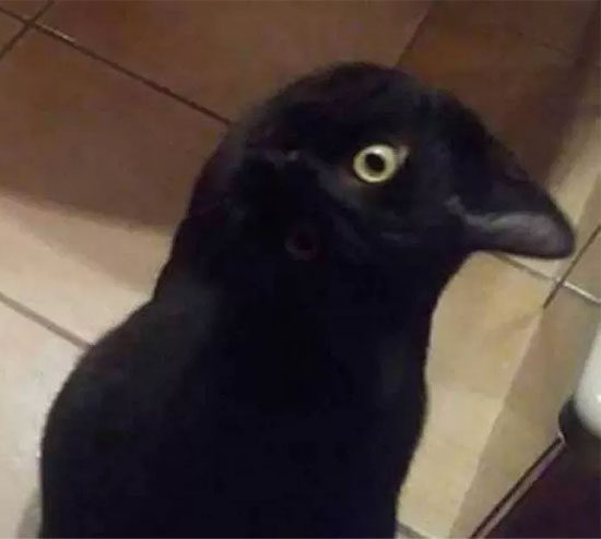 Gato ou corvo - Foto viraliza na internet e confunde até o Google - Img 1
