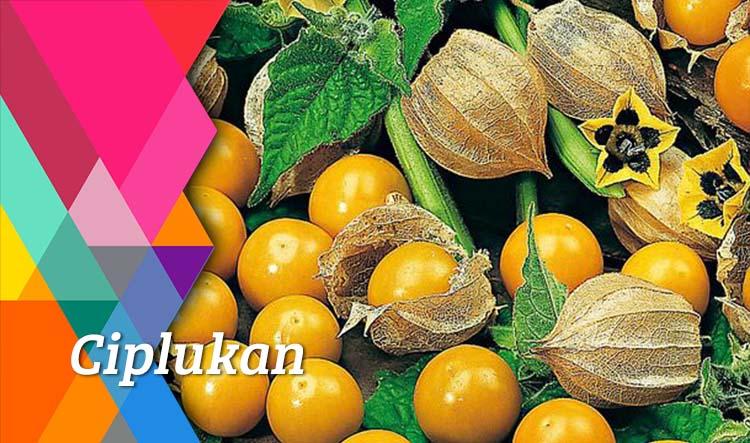 Mix Juice Ciplukan, Selain Menyegarkan Juga Menyehatkan Lho!
