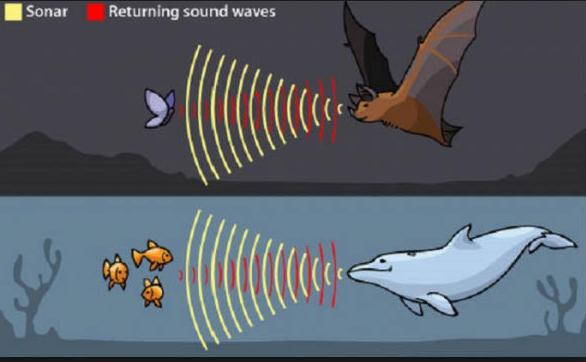 Contoh Gelombang Ultrasonik