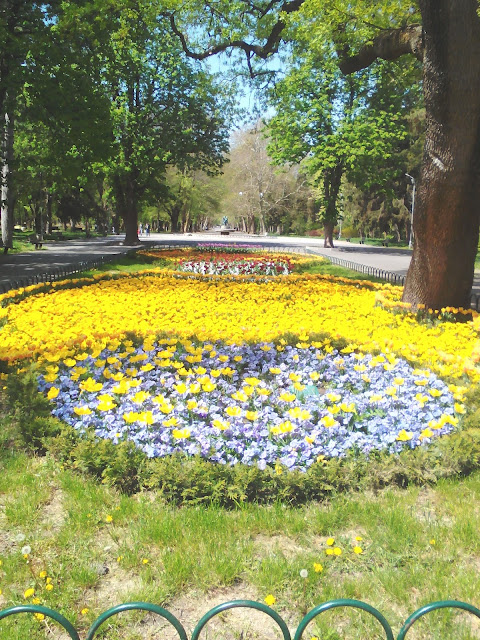 Flower Bed, Blooming Yambol City Park, Yambol,