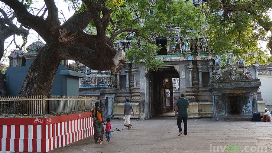 Sevvai - Vaitheeswaran Temple