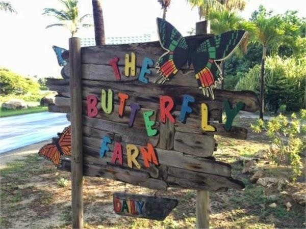 Experience A Butterfly Farm