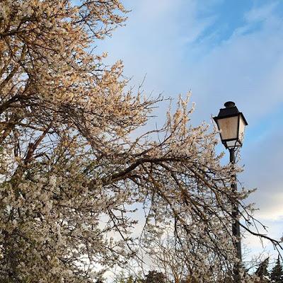 Provence Printemps Spring Arbres en fleur Pensée positive Positive Thinking Daily Walk Nature