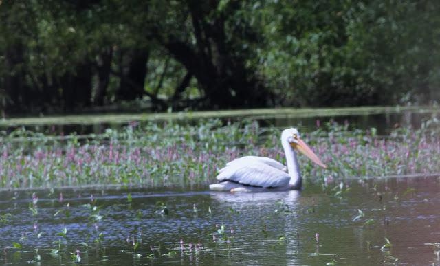 Nature devotions for Scott and white fish pond