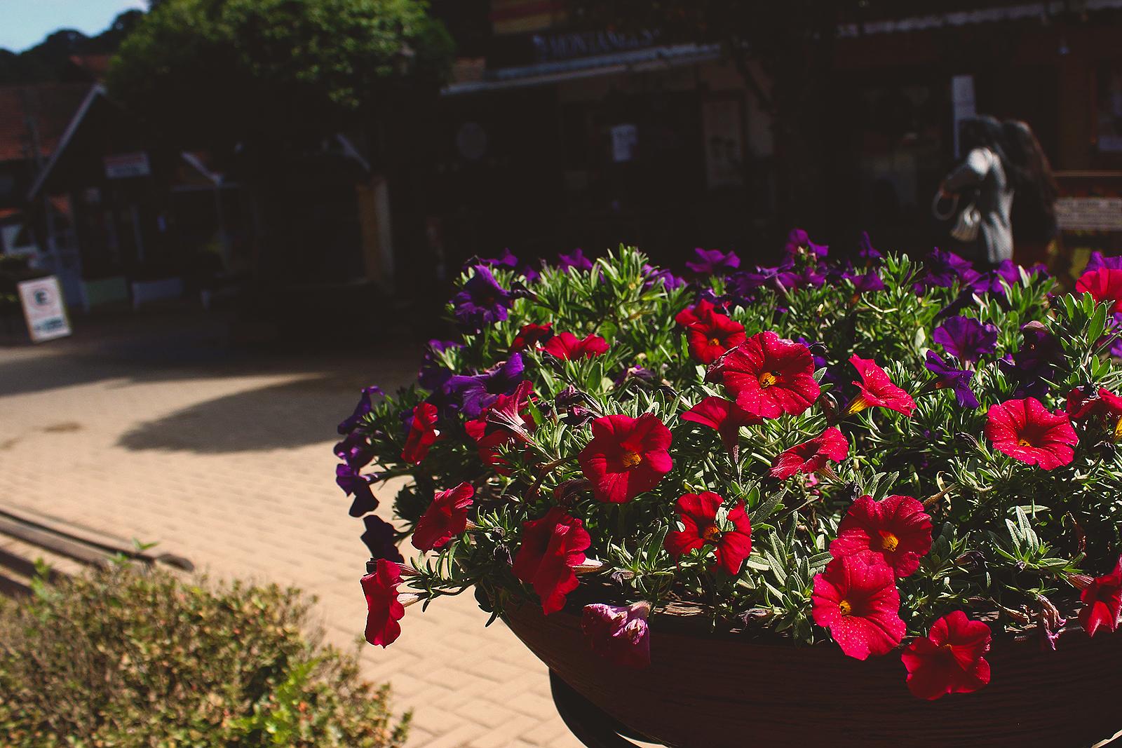 vaso grande flores vermelhas rua cidade
