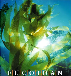 Algas Fucoxantina