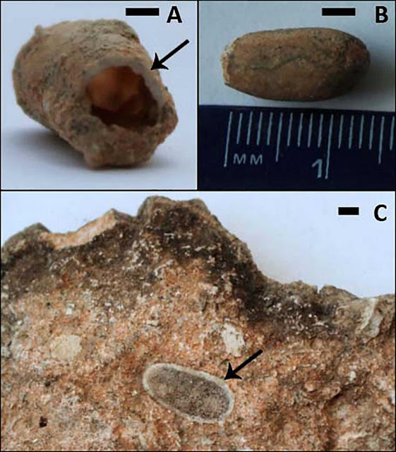 Fossil bee nests provide clues about the environment in which Australopithecus africanus lived