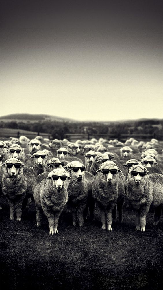 Cool Sheep IPhone Wallpaper