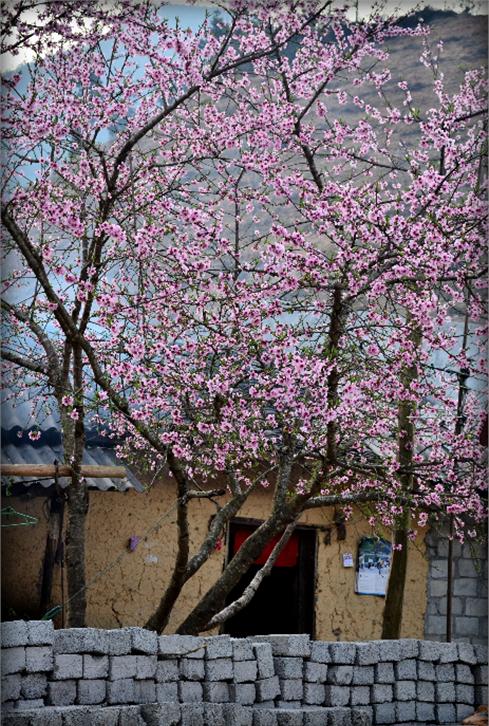Du lịch Hà Giang mùa hoa đào nở