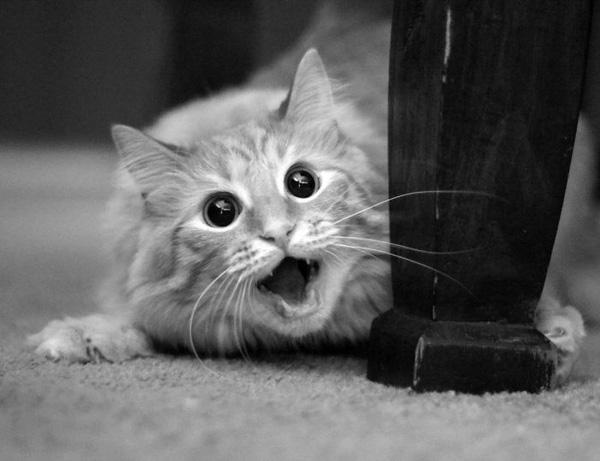 """Chết cười với những khoảnh khắc """"há hốc miệng"""" của các loài động vật"""