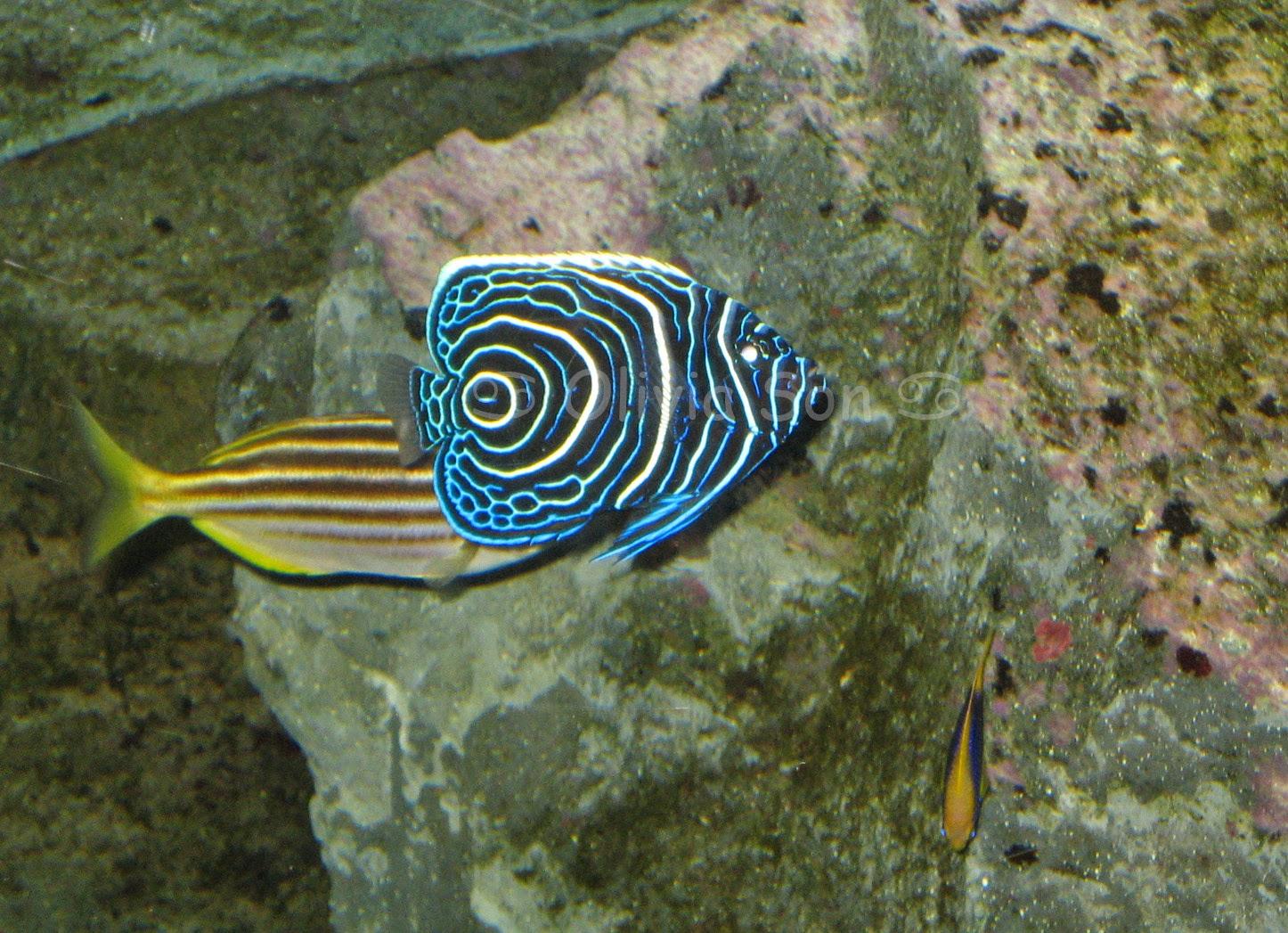 Sydney Aquarium, Sydney, Australie