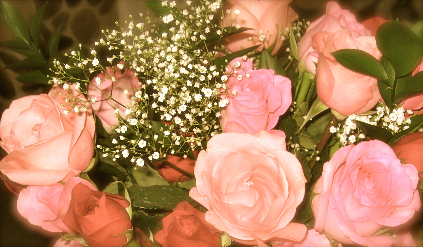 lovely roses to brighten your day