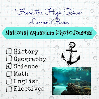 National Aquarium PhotoJournal (From the High School Lesson Book) on Homeschool Coffee Break @ kympossibleblog.blogspot.com - photos from our recent field trip, and a link up for homeschooling through high school posts