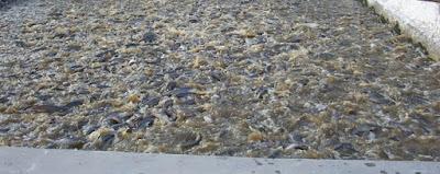 cara budidaya ikan lele di kolam tembok,kolam beton,,kolam tanah,kolam terpal,lele di kolam tembok,gurame di kolam tembok,nila di kolam tembok,