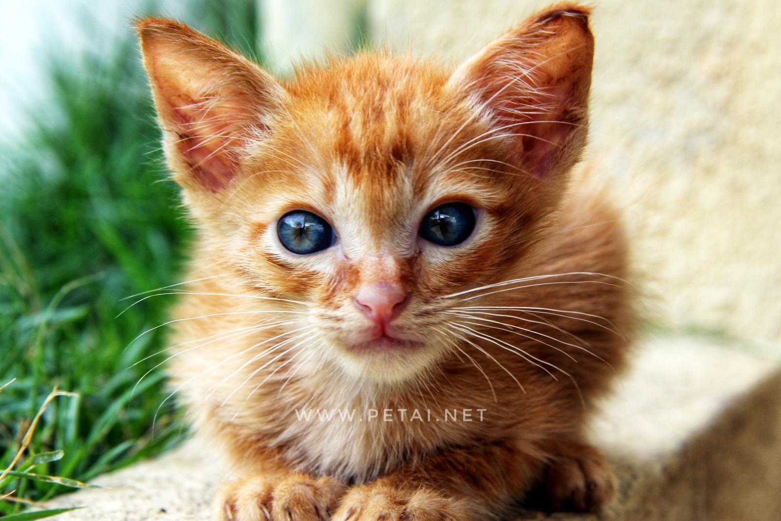 Mengenang Kucing Kesayangan Kami Oyen