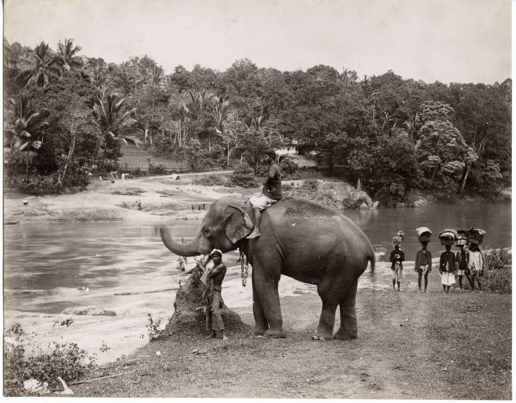 Elephant and Men Standing by River - c1880's