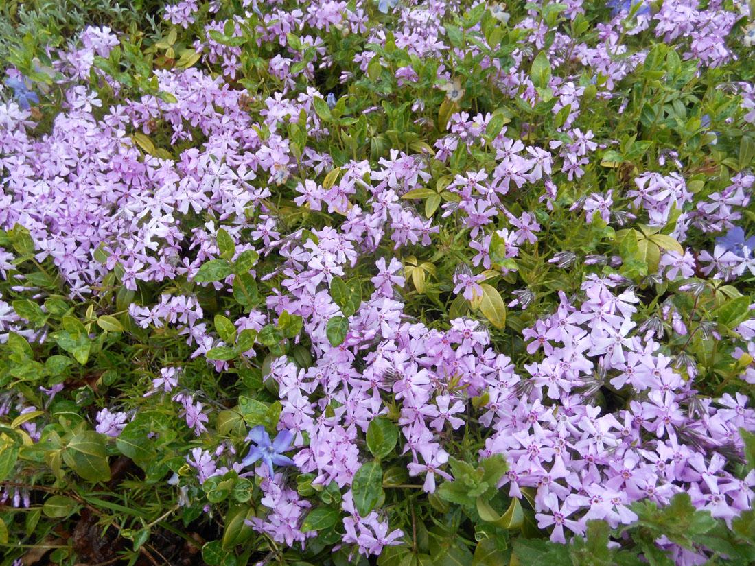 Un po' di fiori sulla collina