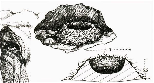 Argentina nativa: Viudita de río: Sayornis nigricans