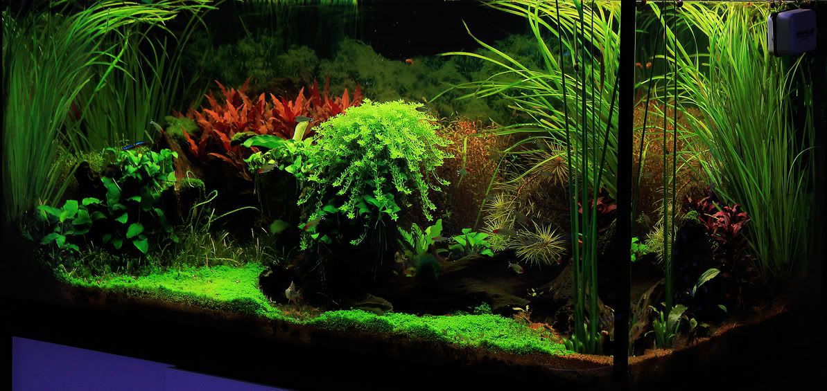 hồ thủy sinh trồng hẹ, ráy, hồng liễu, và một số loài khác tạo nên khung cảnh sinh động