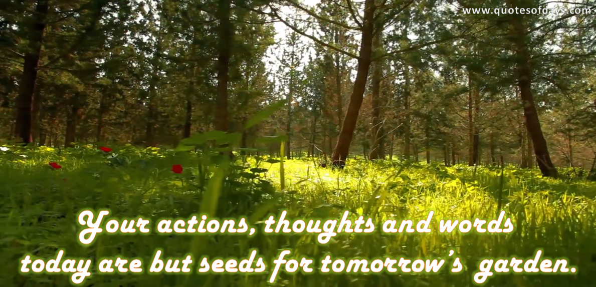 Your actions, thoughts and words today are but seeds for tomorrow's garden.