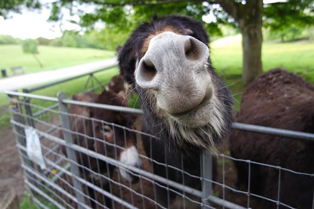 close up of donkey's nose