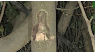 Aparece  imagen de la Virgen María adherida a un árbol en La Vega