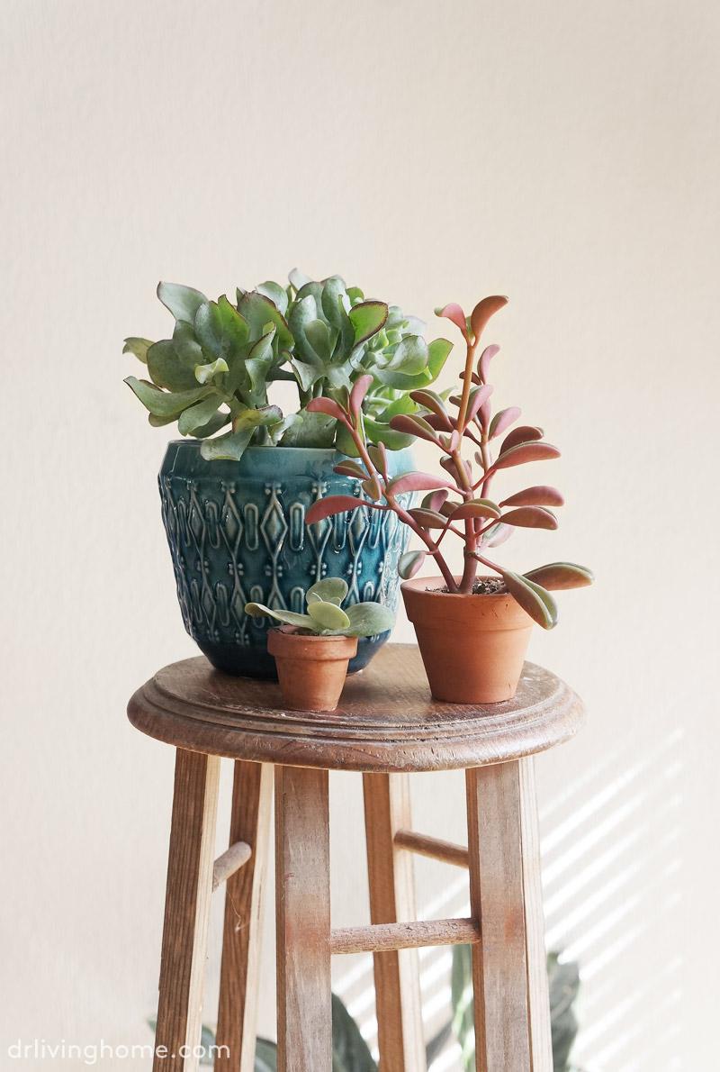 5 plantas f ciles de cuidar ii blog decoraci n con tu for Decoracion de casa x dentro