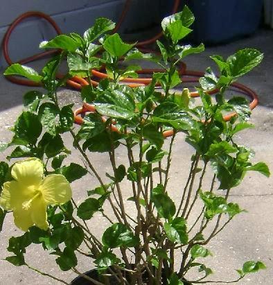plantas limpias y brillosas