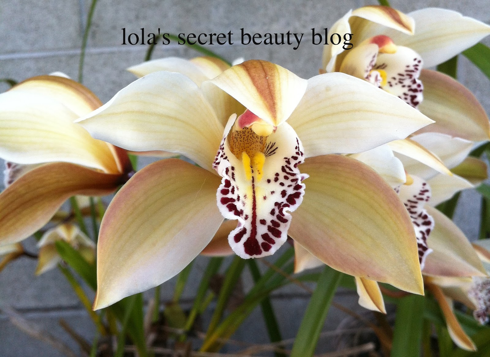 Lola S Secret Beauty Blog Orchids In Bloom