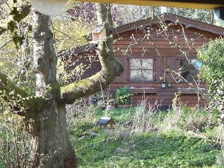 Der vegane Garten - Nusshaus