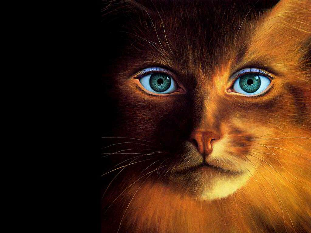 funny animals wallpapers cats - photo #32