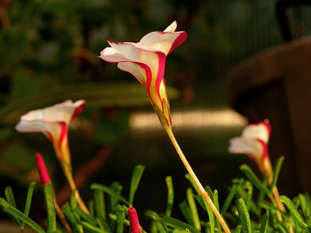 Las 10 Flores Mas Raras Del Mundo Con Imagenes Amigos De La Jardineria