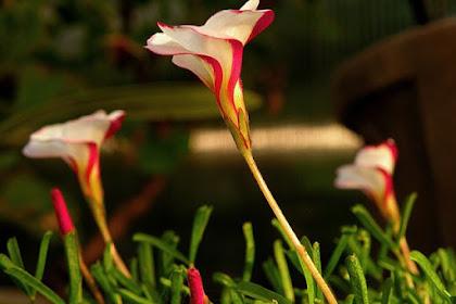 Nombres De Flores Raras Del Mundo