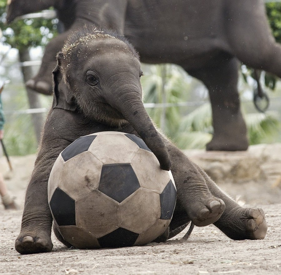 Cute Animals Playing Soccer Wallpaper 30 Photos Cute Animals Play Ball Free Download Wallpaper