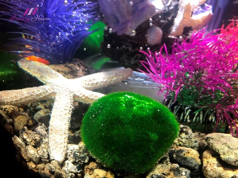oase biorb tube aquarium green moss