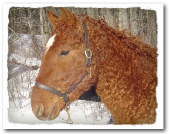I Spy Animals: Horses That Curl