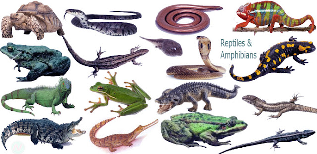 reptiles and amphibians names, necessary vocabulary