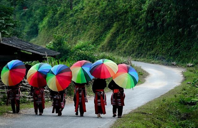 Splendid Golden Season in Hoang Su Phi 3