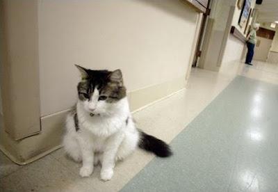 kucing gaib oscar melihat makhlus halus