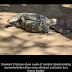 BAD LUCK!!  After Much Enjoyment See What happened To these monitor lizards