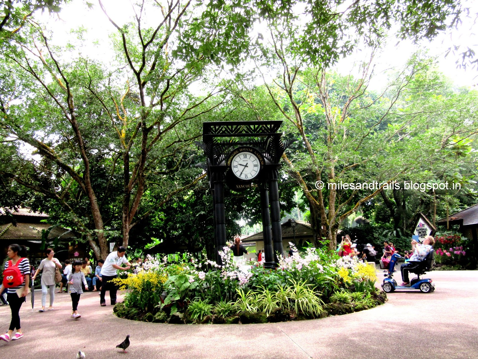 miles and trails: singapore botanic gardens, singapore
