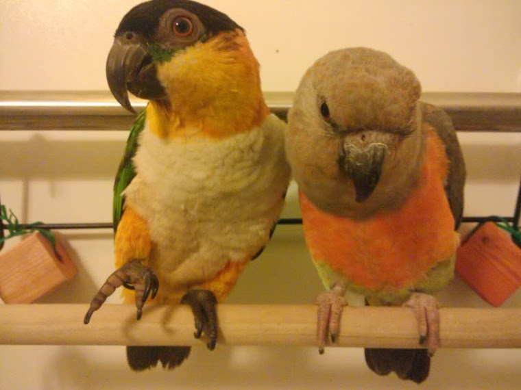 Image result for parrots eggs bloggers