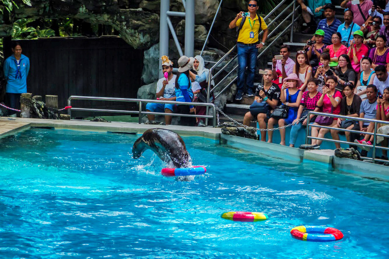 Marine Park Shows in Bangkok