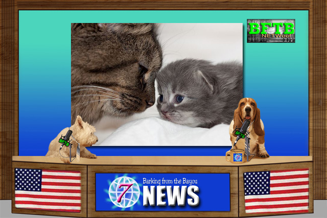 BFTB NETWoof News story on mother cat reunited with her kittems
