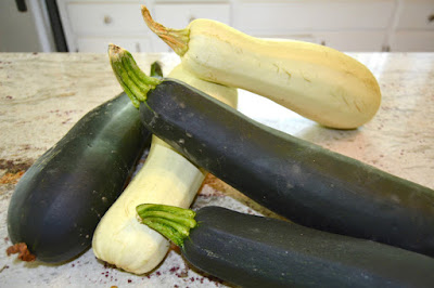 Mid-east hybrid specialty zucchini squash and dunja organic hybrid zucchini